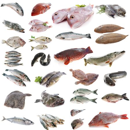 composite picture of fish in front of white background Foto de archivo