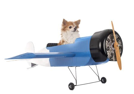 chihuahuas and plane in front of white background