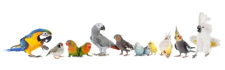 group pf birds in front of white background