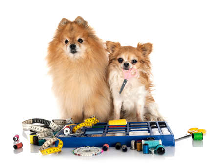 Sewing Accessories and little dog in front of white background