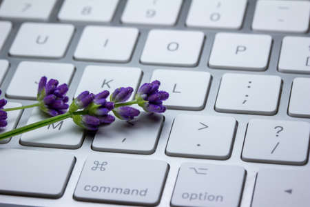 Close up view of sprigs of purple lavender herb flower buds brightening up a metallic gray computer keyboard, on white background with copy space Reklamní fotografie