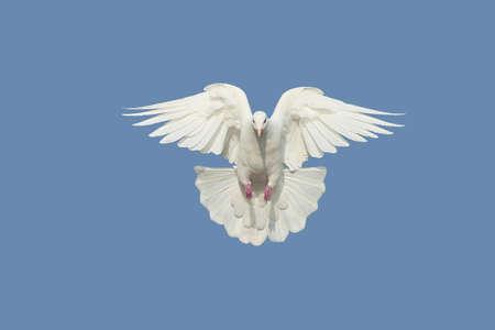 open wings: Dove