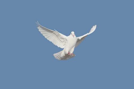 flucht: Taube Lizenzfreie Bilder