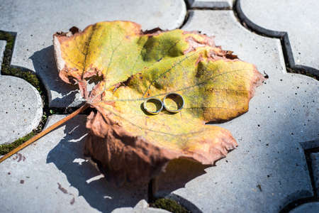 Wedding rings on big leaf with autumn colours photo