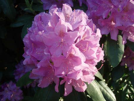 Purple flower Reklamní fotografie