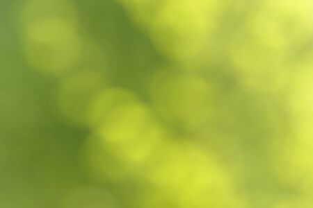 Blurred bokeh nature background. Abstract natural backdrop of park, forest or garden. Soft defocused photo of plants with leaves and stems. Tree, bush or grass made with bokeh effect.