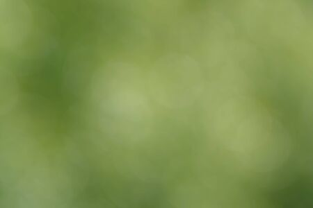 Blurred bokeh nature background. Abstract natural backdrop of park or garden. Soft defocused photo of plants with leaves and stems. Tree, bush or grass made with bokeh effect.