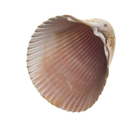 Seashell isolated on white background photo