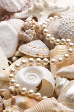 seashell background with pearls Stock Photo