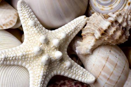 Muschel Hintergrund mit verschiedenen Arten von Muscheln Lizenzfreie Bilder