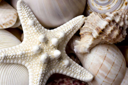 seashell background with various kinds of shells