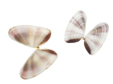 coquina: Coquina mariposa dep�sitos aislados en blanco