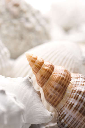 fossilized: fossilized seashell background with various kinds of shells