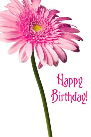 birthday flowers: Roze daisy geïsoleerd op een zuivere witte achtergrond
