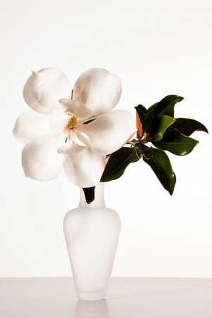vase: White Magnolia Blossom Stock Photo
