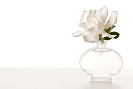 White Gardenia Blossom on Marble Table photo