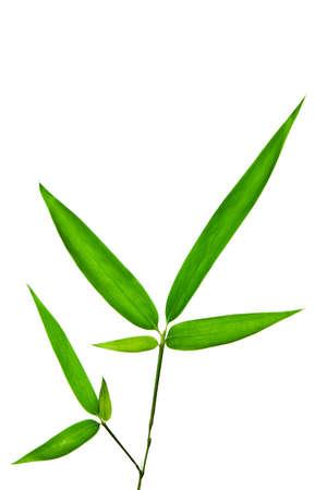 Bambú aislado en fondo blanco Foto de archivo - 7962844