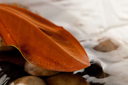 magnolia leaf on river rocks in water Stock Photo - 7963135