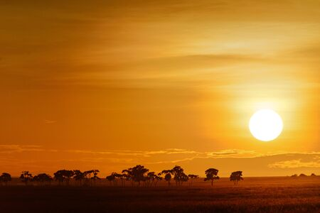 landscape with sunrise on the savanna in Kenya Stock Photo