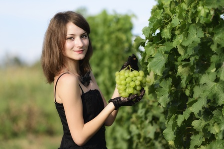 Woman inspecting grapes in a vineyard