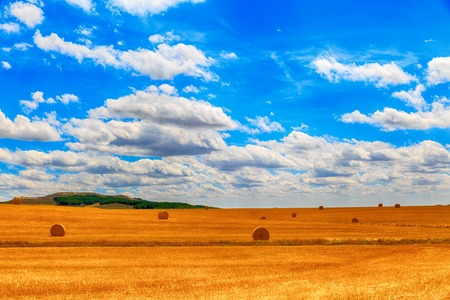 round bale of straw in the meadow photo