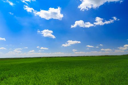 champ vert: champ vert avec le ciel bleu