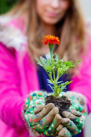 Tagetes flowers Erebta et Patula held in hands Stock Photo