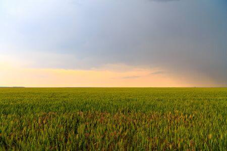 farm field: rain clouds on a farm field