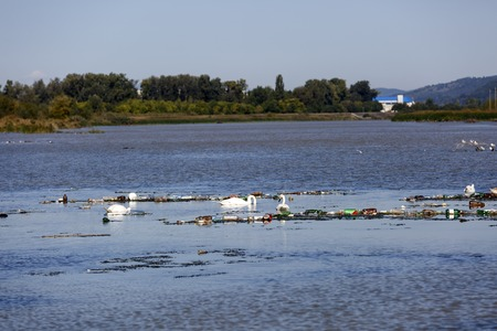urban decline: swans on a lake polluted Stock Photo