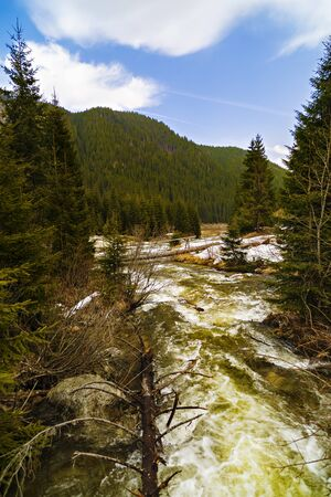 pine creek: Landscape with a river flowing through a pine forest in the mountains