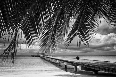 Black and white landscape exotic islands Maldives