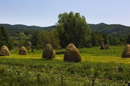 haycock: Haystacks on beautiful summer plateau in Carpathian mountain. Panoramic view on summer rural landscape with haystacks near forest. Green valley.