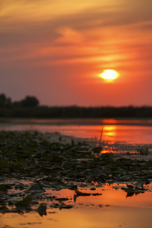 delta: beautiful sunset on Danube Delta