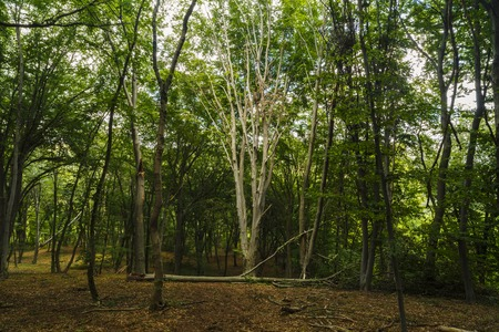 mysterious forest, Hoia-Baciu, Romania Near Cluj