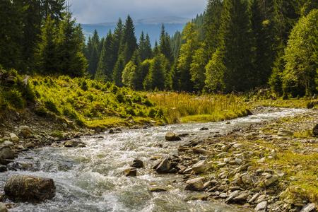 a mountain river that flows through a pine forest