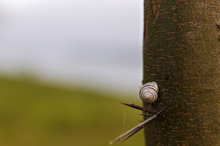 Snail on a tree with spikes