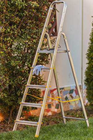 metal ladder on garden with some plants and grass.