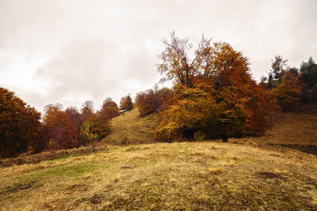 beautiful landscape with trees in autumn colors