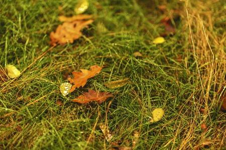 dew on a leaf of a tree fallen on grass