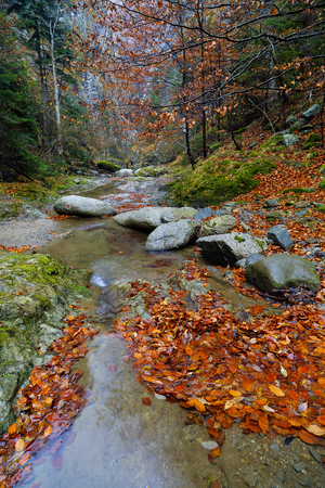 Landscape from Valea lui Stan gorge in Romania