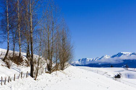 mountain road in winter landscape in Carpathians