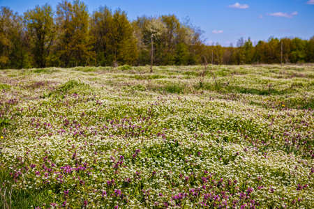 beautiful flowers on a meadow in spring forest Stock Photo