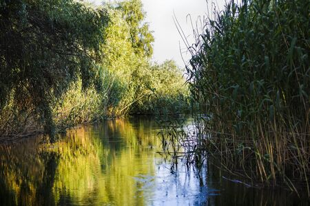 danubian: Landscape with water and vegetation in the Danube Delta, Romania