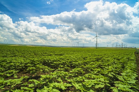 Landscape with an agricultural and wind farm in Romania Stock Photo