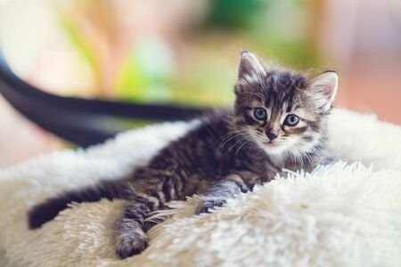 The kitten sits on the pillow Stock Photo
