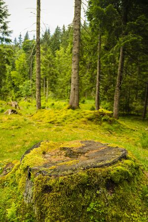 Landscape with an old pine forest with moss and lichens Stock Photo
