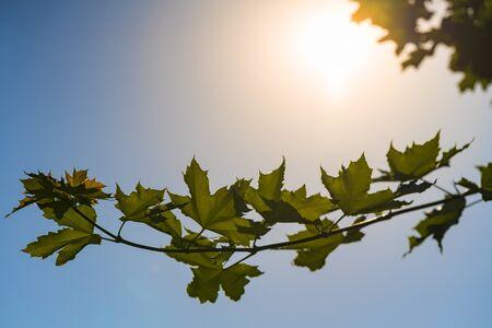 緑の木の枝。太陽の光は葉から落ちる。