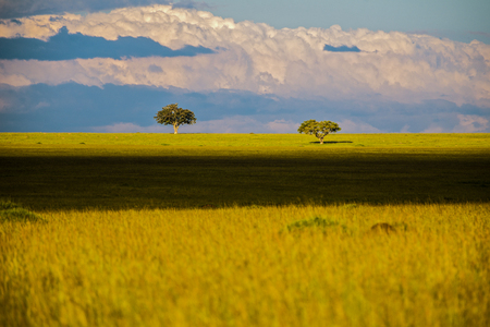 landscape with savannah trees in Africa, Safari, Kenya. Stock Photo - 88148048