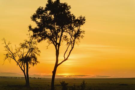 Gorgeous sunrise in Africa, Safari, Kenya.