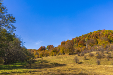 Colorful autumn landscape. Carpathian mountains, Romania, Europe. 版權商用圖片